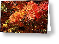Fall Foliage Colors 21 Greeting Card