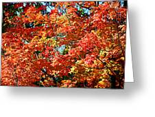 Fall Foliage Colors 22 Greeting Card