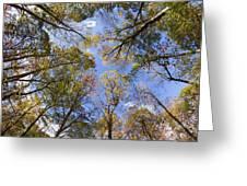 Fall Foliage - Look Up 2 Greeting Card