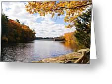 Fall Foliage V Greeting Card