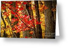 Fall Forest Detail Greeting Card