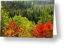 Fall Forest Rain Storm Greeting Card by Elena Elisseeva