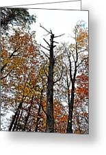 Fall Forrest Greeting Card by Stephanie Grooms