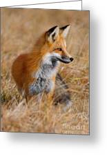 Fall Fox Greeting Card