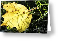 Fall Frost Greeting Card