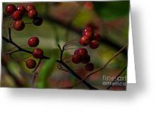 Fall Fruit Greeting Card
