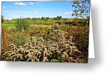 Fall Goldenrod Field Greeting Card