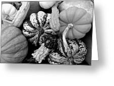 Fall Gourds Black And White Greeting Card