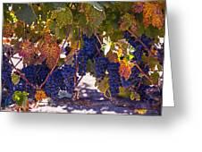 Fall Grape Harvest Greeting Card