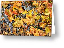 Fall Grapes Greeting Card