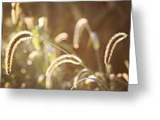 Fall Grass Greeting Card