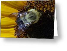 Fall Harvest Greeting Card