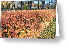 Fall Hedge Greeting Card
