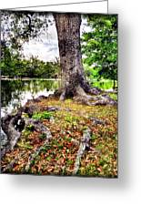 Fall In Audubon Park Greeting Card by Ray Devlin
