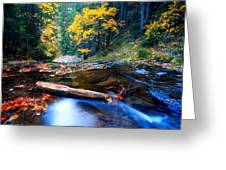 Fall In Bulgarian Forest  Greeting Card