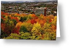 Fall In Colors 1 Greeting Card by Jocelyne Choquette