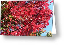 Fall In Illinois Greeting Card