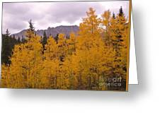 Fall In Maroon Bells Greeting Card