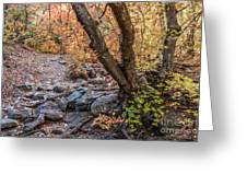 Fall In Miller Canyon 19 Greeting Card