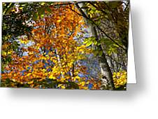 Fall In Nh 2 Greeting Card