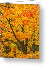 Fall In Pennsylvania Greeting Card