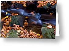 Fall In Rock Creek Park Greeting Card