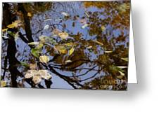 Fall In The Lake In Vienna No. 1 Greeting Card
