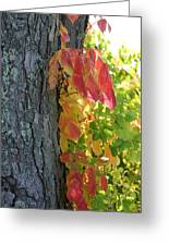 Fall In The Orchard Greeting Card