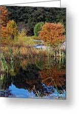 Fall In The Wetlands Greeting Card