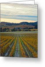 Fall In Wine Country Greeting Card