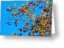 Fall-ing Leaves Greeting Card