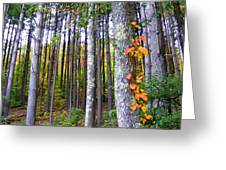 Fall Ivy In Pine Tree Forest Greeting Card