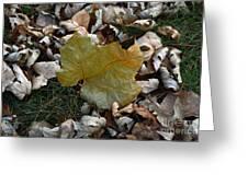 Fall Leaf Greeting Card