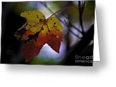 Red And Yellow Maple Leaf Greeting Card