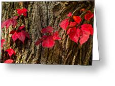 Fall Leaves Against Tree Trunk Greeting Card