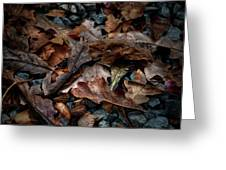 Fall Leaves And Acorns Greeting Card