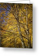 Fall Leaves And Trees In West Michigan No171 Greeting Card