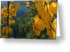 Fall Leaves Greeting Card