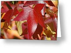 Fall Leaves I Greeting Card