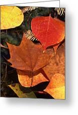 Fall Leaves I I Greeting Card