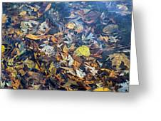 Fall Leaves In A Pond Greeting Card