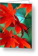 Fall Leaves In All Their Glory Greeting Card