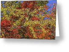 Fall Leaves In So Cal Greeting Card