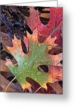 Fall Leaves I V Greeting Card