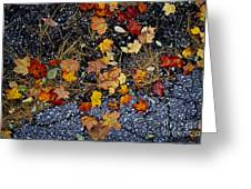 Fall Leaves On Pavement Greeting Card by Elena Elisseeva
