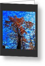 Fall Majesty Greeting Card