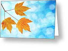 Fall Maple Leaves Trio With Blue Sky Greeting Card
