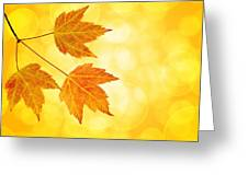Fall Maple Leaves Trio With Bokeh Background Greeting Card