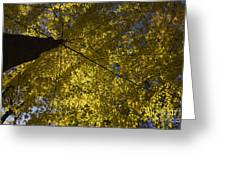 Fall Maple Greeting Card