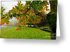 Fall Maple Tree In Foggy Park Greeting Card